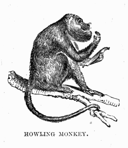 Howling Monkey, from Wikimedia Commons